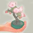 mame-bonsai