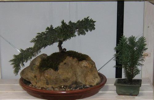 bonsai-kamen