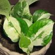«Живой свет» и аура растений