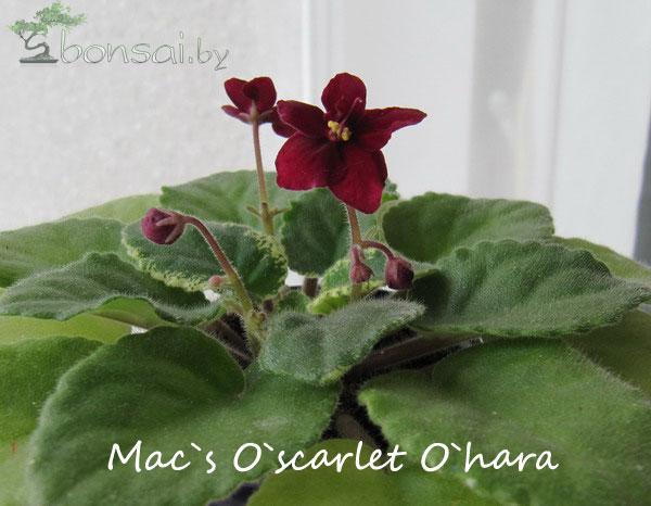 Mac`s-O`scarlet-O`hara