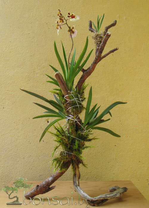 epiphytic-tree